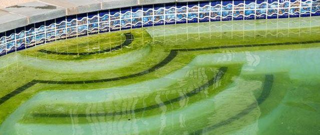 Causas y soluciones para las algas en la piscina